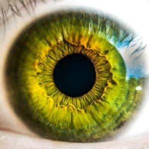 Lentille yeux